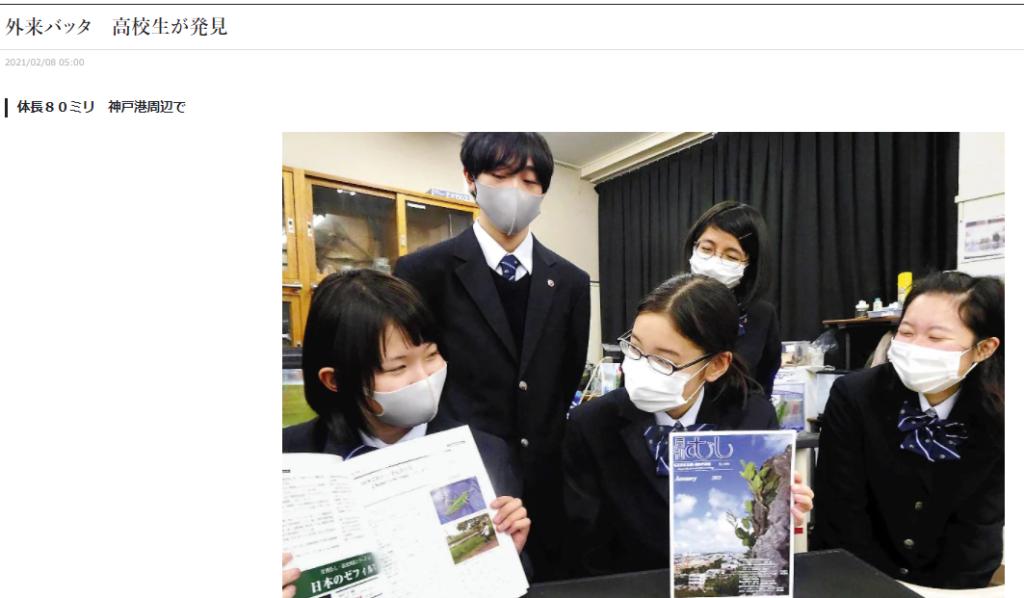 外来バッタChondracris rosea 高校生が発見 読売新聞